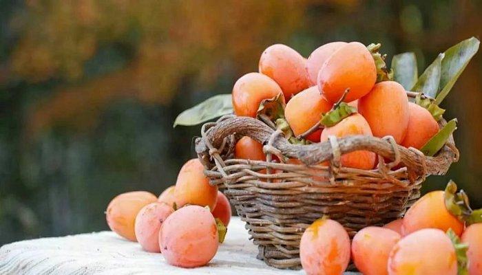 这种独有的东方水果,没想到吃上两个它就可以满足一天维C含量,性价比也是高! - 明藏道妙 - 上塔山房de博客