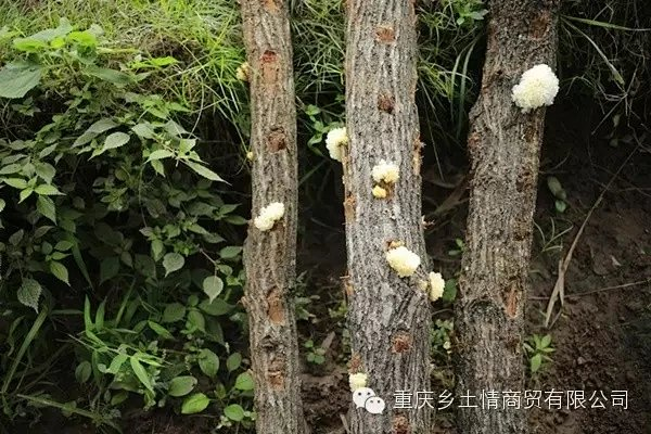 野生菌,野生蘑菇,野生山珍
