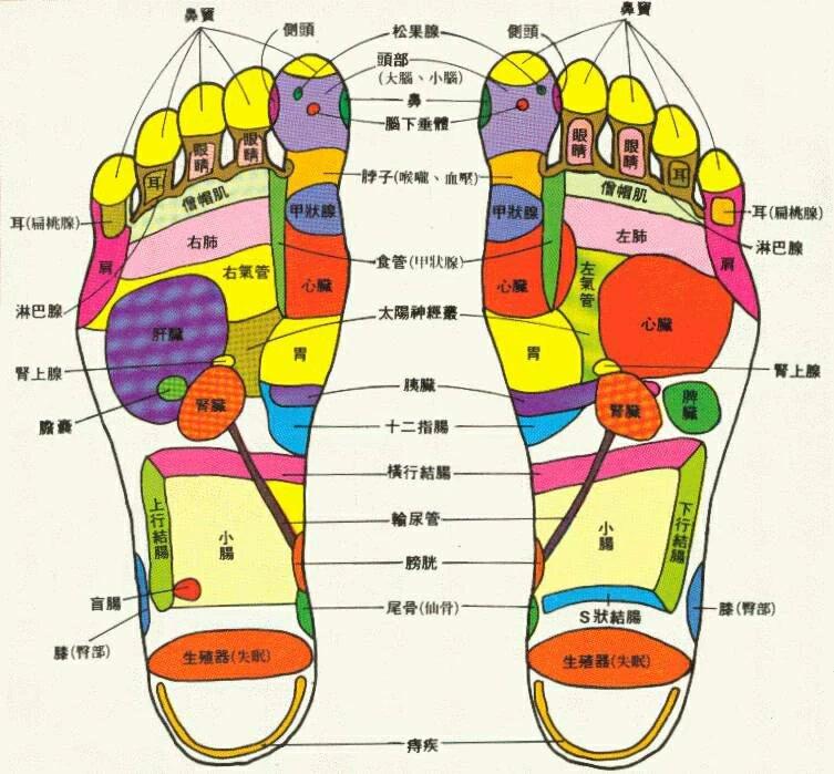 脚背部反射区图_[转载]人体面、耳、手、脚、背反射区图,高清、直观,一看就 ...